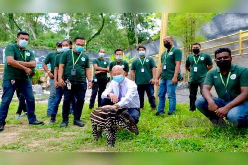 RM10,000 menanti siapa berjaya namakan anak tapir